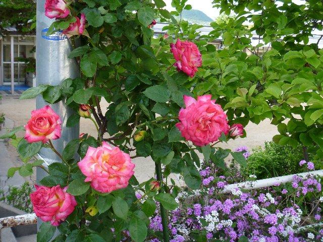 初夏の花(2).JPG