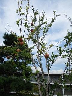 秋の実り3.jpg