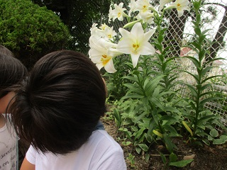 2018ゆり花4.JPG